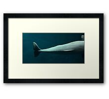 Whale Tail Framed Print