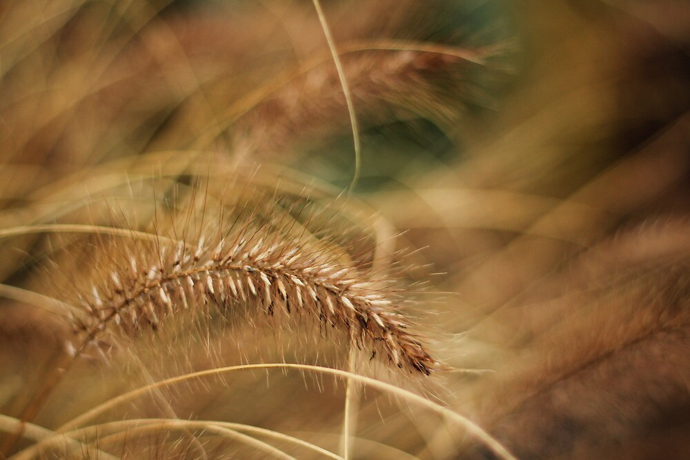 Ornamental Grass by Tracy Friesen