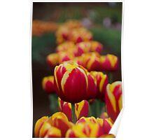 Tulips@Tesselaar Festival Poster