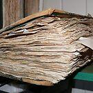 Bound for the Record Books: Morgun, Queensland, Australia by linfranca