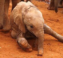 Tiny Baby Enjoying the Dust by Carole-Anne