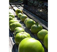 Last Tomato Harvest Photographic Print