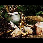 Frog Trinket by jessicacbarker