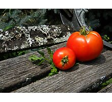 First Tomato Harvest Photographic Print
