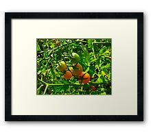 I have the munchies for the crunchies Framed Print