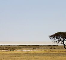 Etosha  by Antionette
