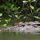 What a croc! - Daintree River, Queensland by Dan & Emma Monceaux