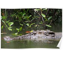 What a croc! - Daintree River, Queensland Poster