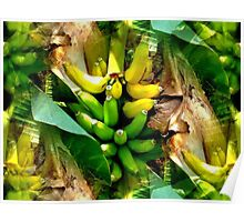 """Banana Tree in Front Yard""  Poster"