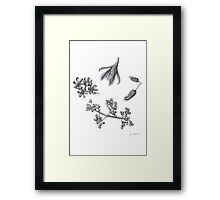 Dried Fruits Framed Print