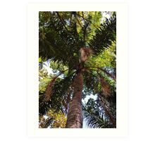 tall palm Art Print