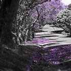 Purple Spring by ashercobb