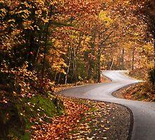 Zig Zag road by Gisele Bedard