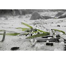 green sea weed Photographic Print