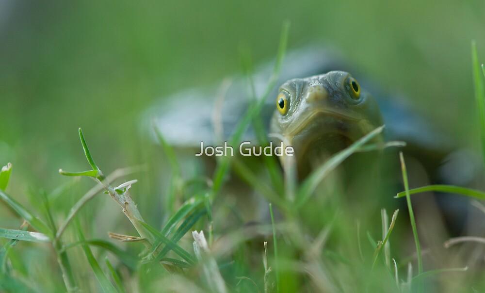 Turtle by Josh Gudde