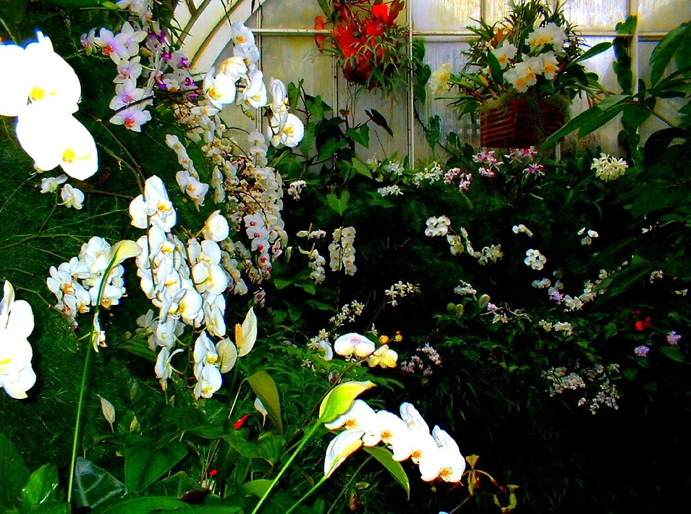 """""""Orchids in Greenhouse 60""""  by njchip123"""
