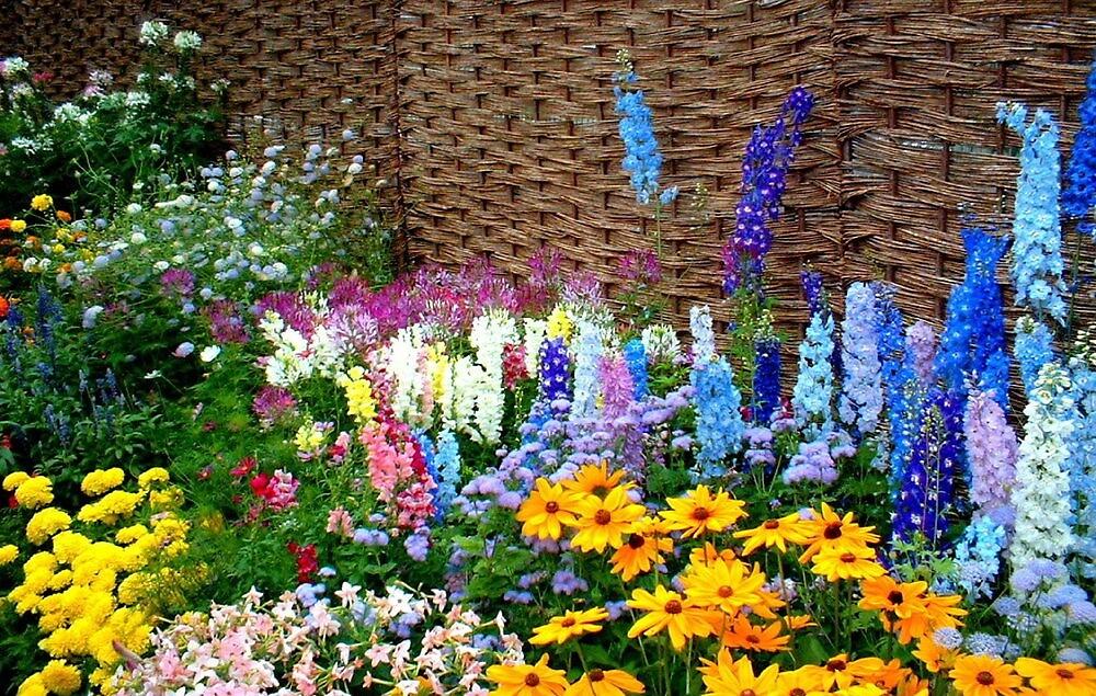 """""""Garden Flowers 1""""  by njchip123"""