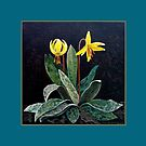 """""""Trout Lily""""   by Jean Gregory  Evans"""