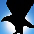 Eagle Silhouette by Bill Colman