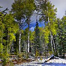 A Touch Of Winter by Charles & Patricia   Harkins ~ Picture Oregon