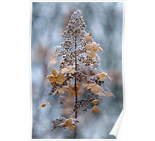 Winter lace Poster