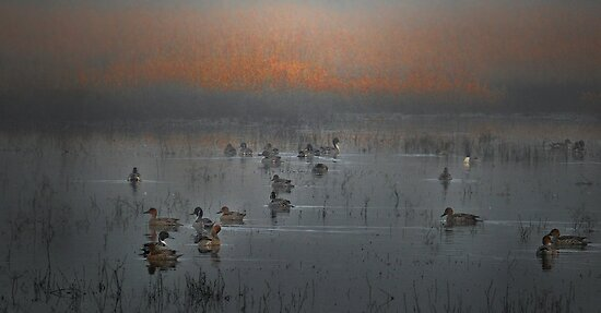 Duck The Fog by Charles & Patricia   Harkins ~ Picture Oregon