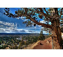 Lookout Tree - Pilot Butte Photographic Print