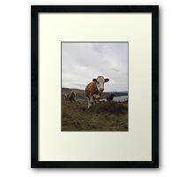 Cows  Framed Print