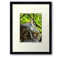 Iguana Royal  Framed Print