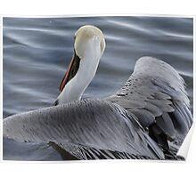 Pelican's Elegance - Elegancia Del Pelicano Poster