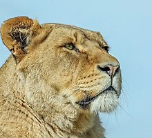 The Regal Lioness by Mark Hughes