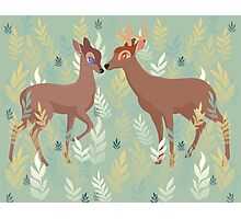 Bambi and Faline Photographic Print