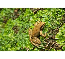 The FROG 2 - Poster/Canvas Photographic Print