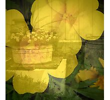 Barns and Blooms: Marigold and Washtub Photographic Print