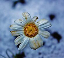 Winter Time by Xoanxo