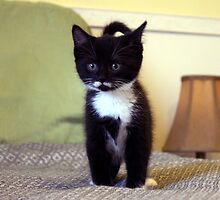 Barn Kitten by Johnny Furlotte