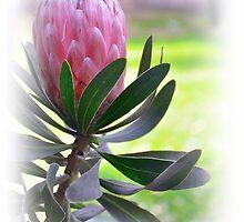 Una  flor....... by cieloverde