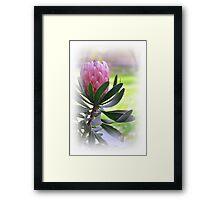 Una  flor....... Framed Print
