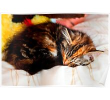 Sleeping Kitten Poster