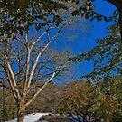 USA. New York. Central Park. The First Snow. by vadim19