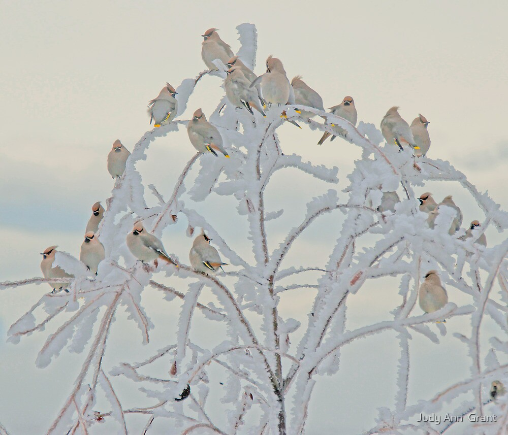Mother Nature Decorates  by Judy Grant