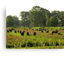Cows 01 Canvas Print