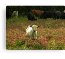 Cows 03 Canvas Print