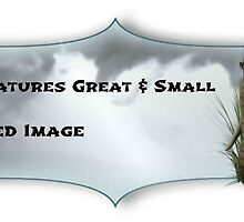 All Creatures Great & Small Proposed Banner by Morag Bates
