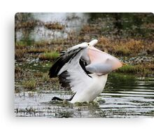 Dine and Dash ~ Pelican with full Basket of fish ~ Canvas Print