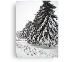 First Snow. Canvas Print