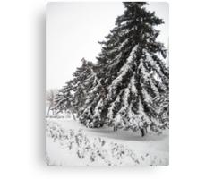 First Snow. Canvas Print
