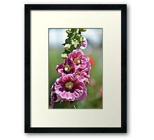 Hollyhock Flowers Framed Print
