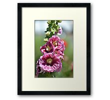 Hollyhock Flowers Framed Print