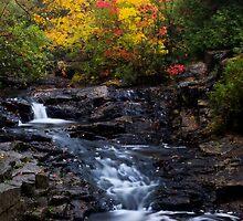 Autumn Swirls by Chad Dutson